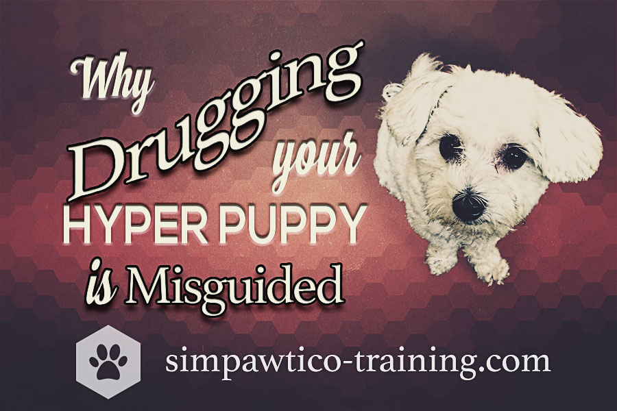 Ging Your Hyper Puppy Is Misguided